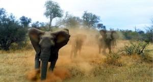 1472301547elephant-terror