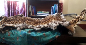 leopard_skin